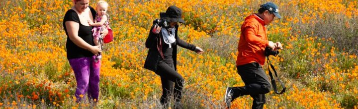"Lake Elsinore, CA:  Wet Winter Results In Wildflower ""Superbloom"""